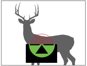 seeall-deer